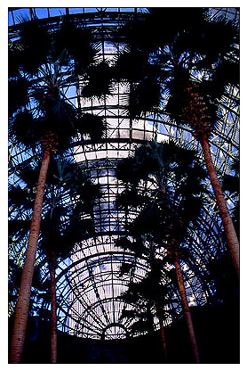 [Wintergarden Palms and World Trade Center - wtc029912.jpg - 93615 Bytes]