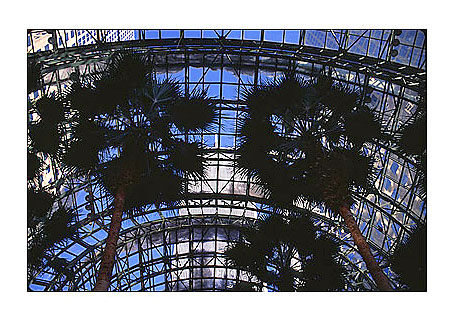 [Twin Towers and Palm Trees from inside the Wintergarden -wtc029913.jpg - 89507 Bytes]