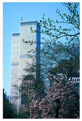 [Blooming Magnolias and Twin Towers -wtc060127.jpg - 95017 Bytes]